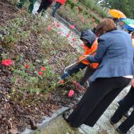 Eva Vlčková zasadila růžičku za poslankyni Mílu Vostrou.
